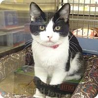 Adopt A Pet :: ROSIE - Diamond Bar, CA