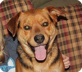 Shepherd (Unknown Type) Mix Dog for adoption in Marion, Arkansas - Drake