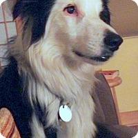 Adopt A Pet :: Paco - Denver, CO