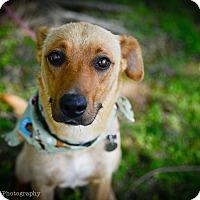 Adopt A Pet :: Marta - Muldrow, OK