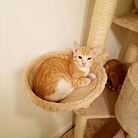 Adopt A Pet :: PYRO - Gilberts, IL