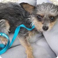 Adopt A Pet :: Star - Thousand Oaks, CA