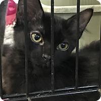 Adopt A Pet :: Bugsy - Fallbrook, CA