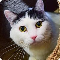 Adopt A Pet :: Leia - Oceanside, CA