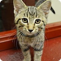 Adopt A Pet :: Damien - Springfield, IL