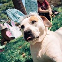 Adopt A Pet :: Humphrey - New Freedom, PA