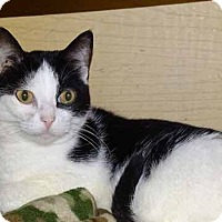 Adopt A Pet :: Skittles - Martinsville, IN