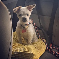 Adopt A Pet :: Thumbelina - Los Angeles, CA