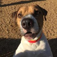 Adopt A Pet :: Snoop - Fairfax Station, VA