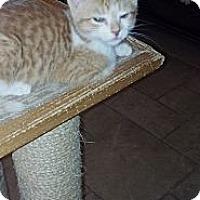 Adopt A Pet :: Garfield - Sterling Hgts, MI