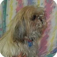 Adopt A Pet :: Dolce Grrbana  ADOPTED!! - Antioch, IL