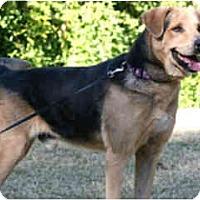 Adopt A Pet :: Jesse- courtesy post - Scottsdale, AZ