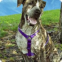 Adopt A Pet :: Isabel - Irving, TX