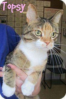 Domestic Shorthair Cat for adoption in Menomonie, Wisconsin - Topsy