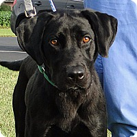 Adopt A Pet :: Cynthia - Lewisville, IN