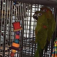Adopt A Pet :: Reece & Dundee - Punta Gorda, FL