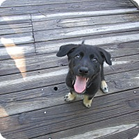 Adopt A Pet :: Lolly - Green Cove Springs, FL
