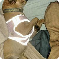 Adopt A Pet :: Napa - Austin, TX