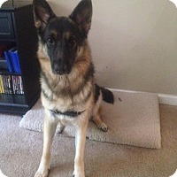 Adopt A Pet :: Darla*ADOPTION PENDING* - Mill Creek, WA
