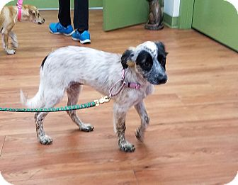 Hound (Unknown Type) Mix Puppy for adoption in Gloucester, Massachusetts - Laurie