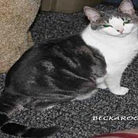 Adopt A Pet :: *BECKAROO - Hanford, CA
