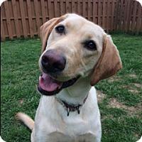 Adopt A Pet :: Rika - Pleasant Plain, OH