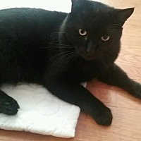 Adopt A Pet :: Binx - Yorba Linda, CA