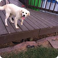 Adopt A Pet :: Buster pending adoption - East Hartford, CT