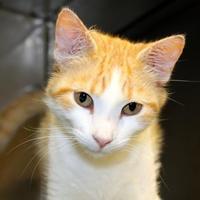 Adopt A Pet :: John - Dodgeville, WI