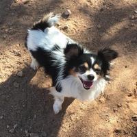 Adopt A Pet :: Freddy - Phoenix, AZ