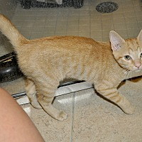 Adopt A Pet :: Marianne- Adorable! - New Smyrna Beach, FL