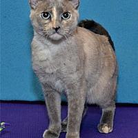 Adopt A Pet :: Alabama - Lenexa, KS