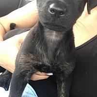 Adopt A Pet :: Bono - Royal Palm Beach, FL