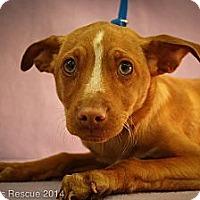 Adopt A Pet :: Zeke - Broomfield, CO