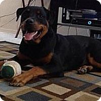 Adopt A Pet :: Tank - El Paso, TX