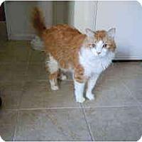 Adopt A Pet :: Marco - Arlington, VA
