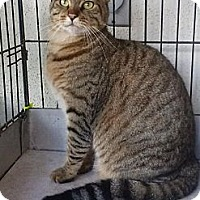 Adopt A Pet :: Sophie - Lantana, FL