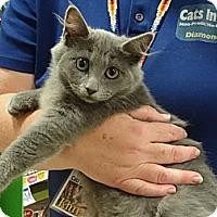 Adopt A Pet :: MARCELLA - Diamond Bar, CA