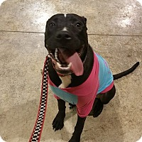 Adopt A Pet :: Nyx - Lima, OH