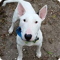 Adopt A Pet :: Nelson - Houston, TX