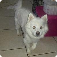 Adopt A Pet :: Kimmel - Glastonbury, CT
