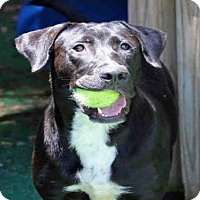 Adopt A Pet :: ONYX - Fort Walton Beach, FL