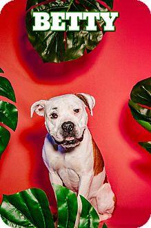 American Bulldog Mix Dog for adoption in San Francisco, California - Betty