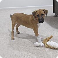 Adopt A Pet :: Madison - Randolph, NJ