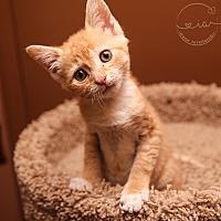 Adopt A Pet :: A..  Quincy - Charlotte, NC