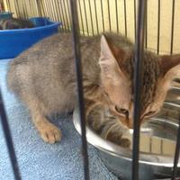 Adopt A Pet :: Nugget - Crawfordville, FL