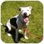 Photo 4 - Pit Bull Terrier Mix Dog for adoption in El Cajon, California - Sadie