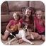 Photo 2 - Sheltie, Shetland Sheepdog/Border Collie Mix Dog for adoption in Salem, New Hampshire - Ladybug