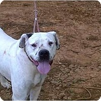 Adopt A Pet :: Blu-Courtesy Listing - Killen, AL
