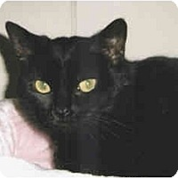 Adopt A Pet :: Bear - Medway, MA